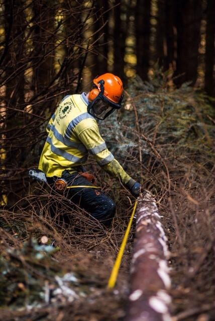 Risks that Forestry Consultants Face Forestry Consultants Insurance | FD Beck