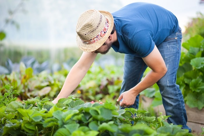 Risks Faced by Agricultural Consultants | FD Beck Insurance Brokers